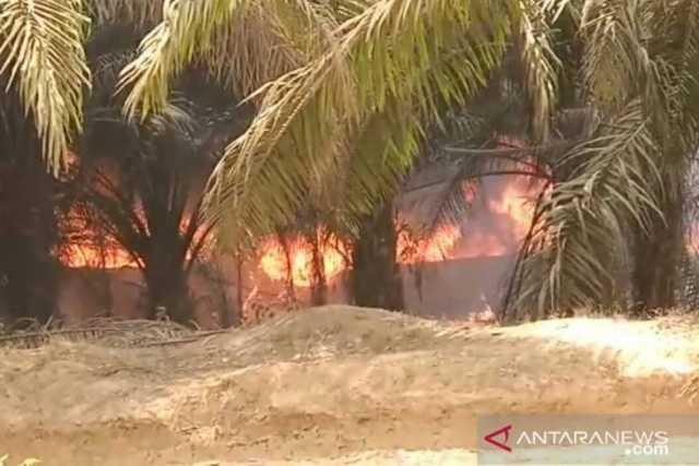 Kebakaran hutan dan lahan di kawasan taman hutan raya Sultan Taha Syaifudin, Batanghari, Jambi. Kebakaran disebabkan oleh aktifitas penambangan minyak secara ilegal. (ANTARA/HO/Ist)