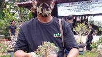 Mingrum Gumay menunjukkan salah satu bonsai. Foto Istimewa for radarcom.id