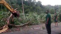 Hujan deras dan angin kencang akibatkan pohon tumbang (ANTARA/HO)